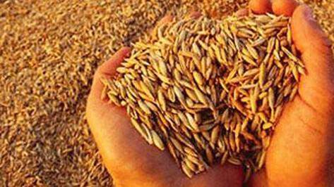 Воронежскую сельхозкомпанию оштрафовали за 20 тыс т опасного зерна