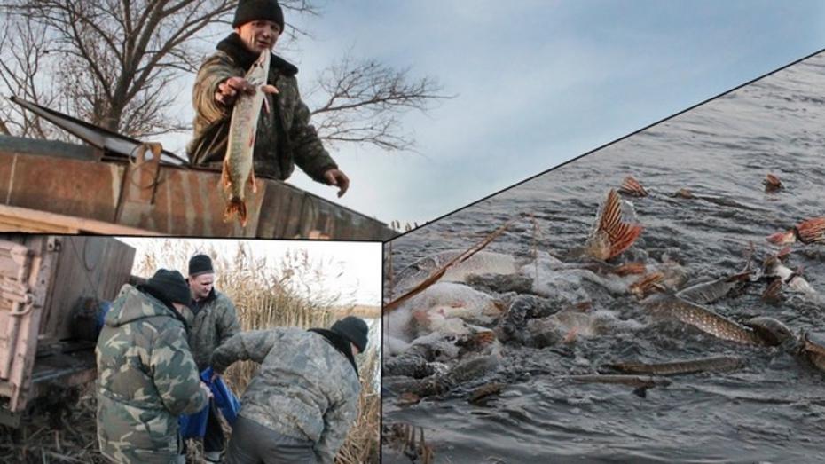 В Терновском районе рыбаки «защучили» пруд