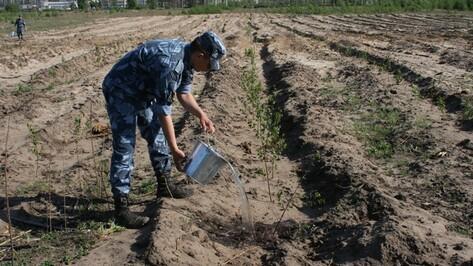 На полив саженцев в масловском лесничестве израсходовано более 20 тысяч ведер воды