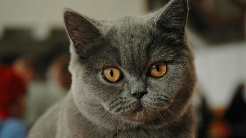 Насильник заманил несовершеннолетнюю кошкой
