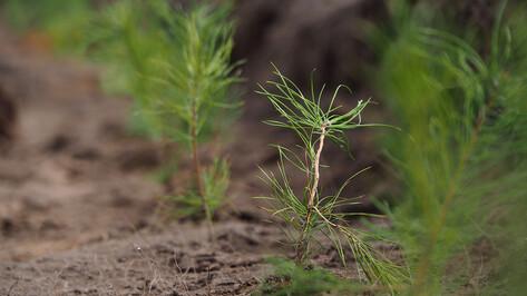 Воронежцев пригласили на весеннюю посадку деревьев на Кожевенном кордоне