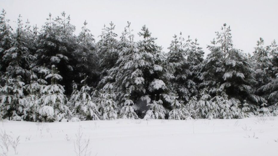 В Новоусманском районе мужчина и женщина заблудились в лесу