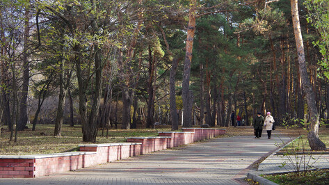 Работы над проектом реконструкции воронежского «Танаиса» начнутся в 2021 году