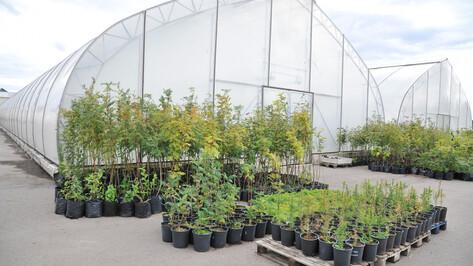 Мэрия Воронежа закупит 1089 саженцев для озеленения города