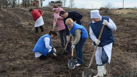 Работники Калачеевского мясокомбината посадили три тысячи тополей