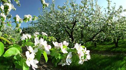 Потепление придет в Воронеж сразу после майских праздников