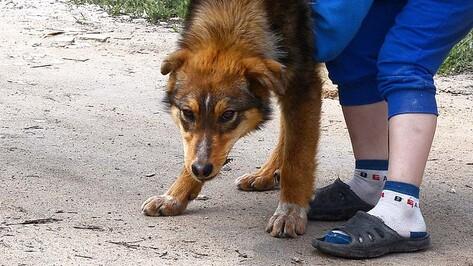 В Семилуках собака умерла после уличной прогулки