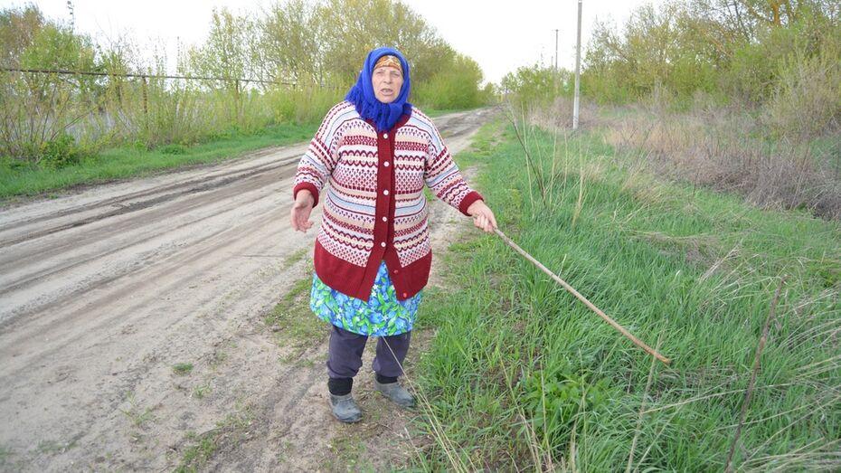 В Воронежской области покусавший пенсионерку бобер был в состоянии стресса
