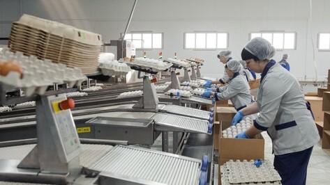 Поголовье кур на птицефабрике в Воронежской области вырастет до 700 тыс в 2018 году
