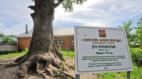 В нацреестр памятников живой природы вошло 10 воронежских деревьев