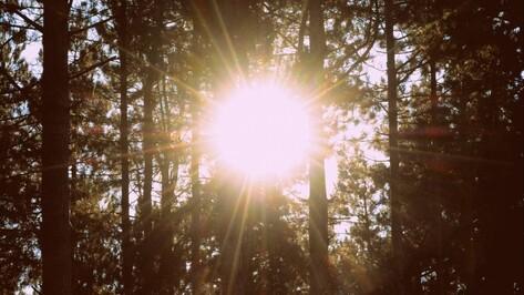 В Воронежском заповеднике установили солнечные батареи