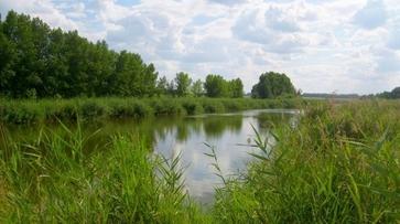 В Воронежской области водолазы нашли тело утонувшего мужчины через 6 дней