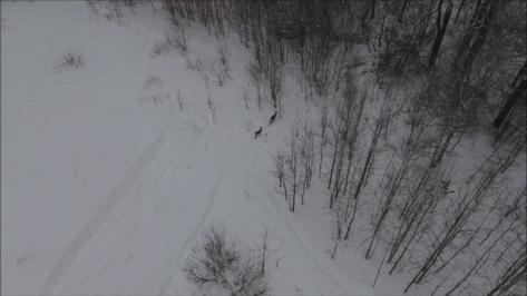 Сотрудники Воронежского заповедника сняли на квадрокоптер олениху и теленка