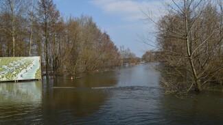 Под Рамонью уровень воды в реке Воронеж снизился на 7 см