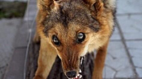 На улице Павловска обнаружили бешеную собаку