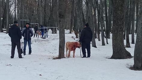 Организатор «собачьих боев» под Воронежем: «Это было зоотехническое мероприятие»