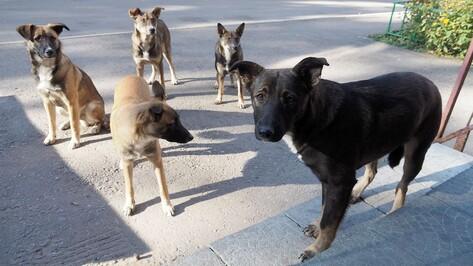 В 2 раза выросло число случаев бешенства среди животных в Воронежской области в 2021 году