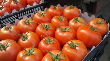 Под Воронежем уничтожат более 300 кг турецких помидоров