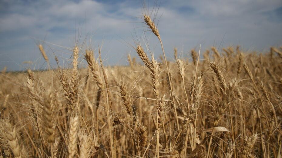 «Продимекс»: основные работы по уборке зерновых завершены