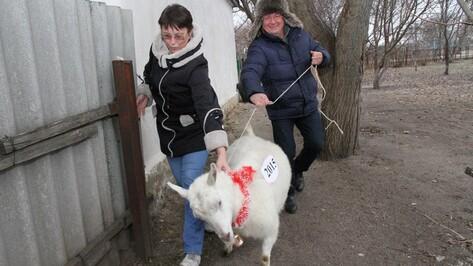 Богучарская многодетная семья получила в подарок козу