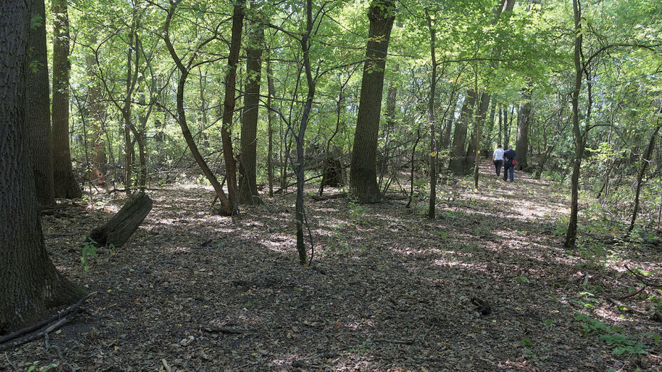 Воронежский биосферный заповедник временно закроет экотропы