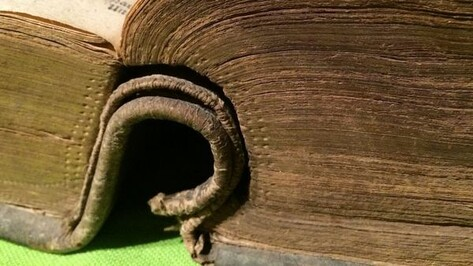 Воронежский литмузей покажет старинные библии