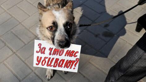Воронежцев предупредили об опасности, подстерегающей у автовокзала владельцев собак