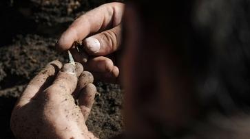 Воронежские поисковики нашли фрагменты военного самолета в яблоневом саду