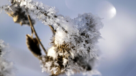 Первые выходные после новогодних каникул в Воронеже будут снежными