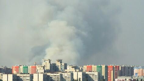 В Воронеже загорелась лесная подстилка во время пожара в Подгорном