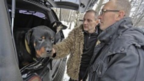 В Воронеж привезли собак, которых волонтеры спасли от отстрела в Сочи