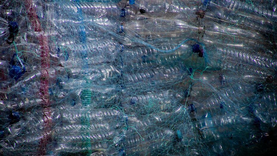 В воронежских супермаркетах может появиться возможность сдавать ПЭТ-бутылки за скидку