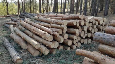 После возмущений в соцсетях в Воронеже приостановили санитарную рубку леса