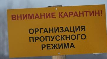 Под Воронежем объявлен карантин по бешенству