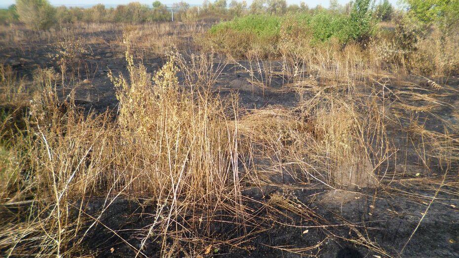 В Каменском районе сгорели более 3 га травы