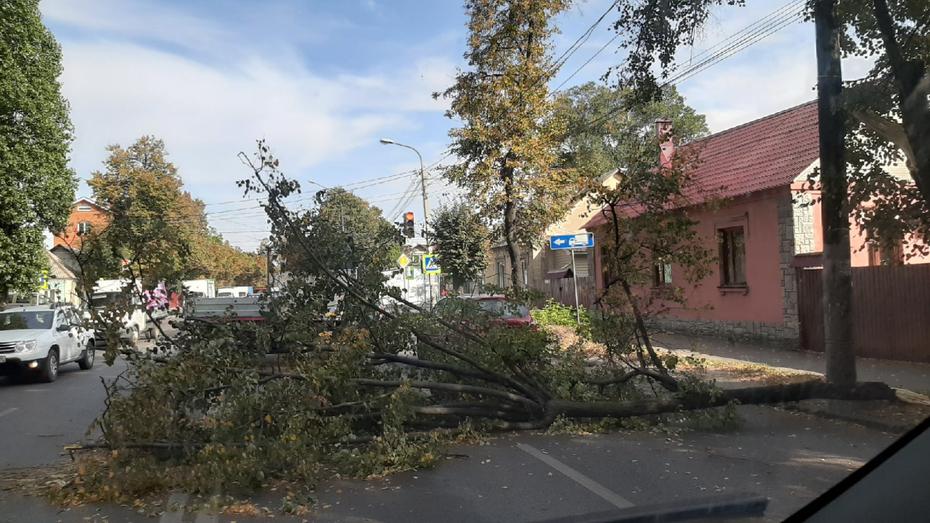 Порывистый ветер повалил деревья на машины в Воронеже