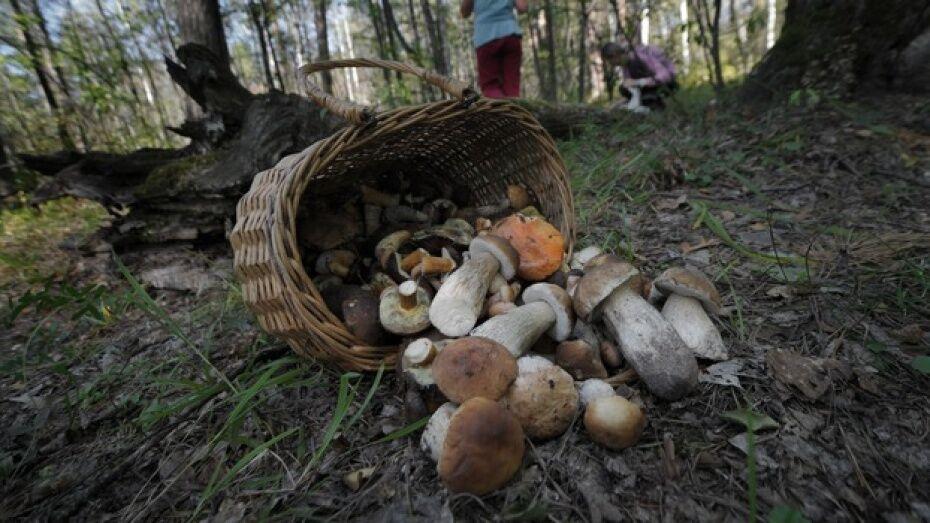 В Воронежской области 3 взрослых и 12-летняя девочка пошли за грибами и заблудились в лесу