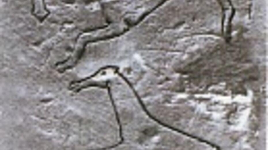 Воронежцам покажут кости лошади, которым около 14 тысяч лет