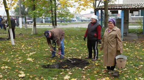 Верхнемамонцы примут участие в национальном проекте «Лес Победы»