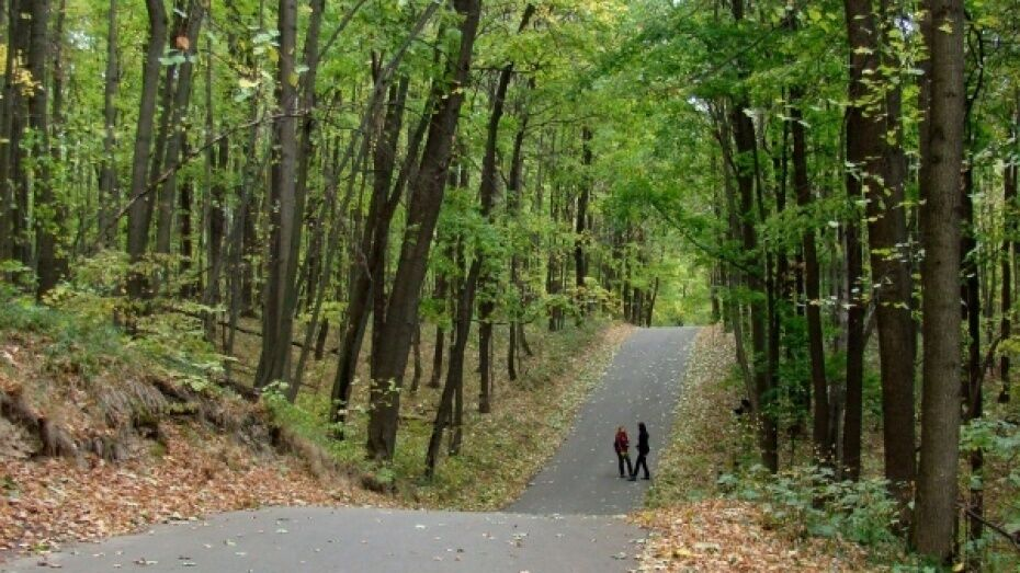 Воронежская область победила в конкурсе Федерального агентства лесного хозяйства