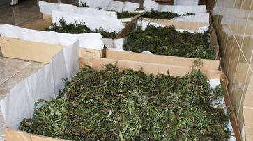 Наркополицейские нашли 15 кг марихуаны у жителя Воронежской области