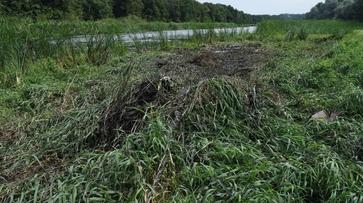 МОЛНИЯ: пропавшего 3-летнего мальчика нашли мертвым на границе Воронежской области