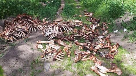Воронежцы вновь пожаловались на неубранную груду костей в Подгорном