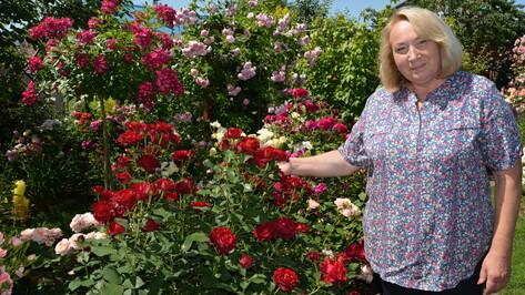 По английскому типу. Жительница Воронежской области разбила сад из 250 сортов роз
