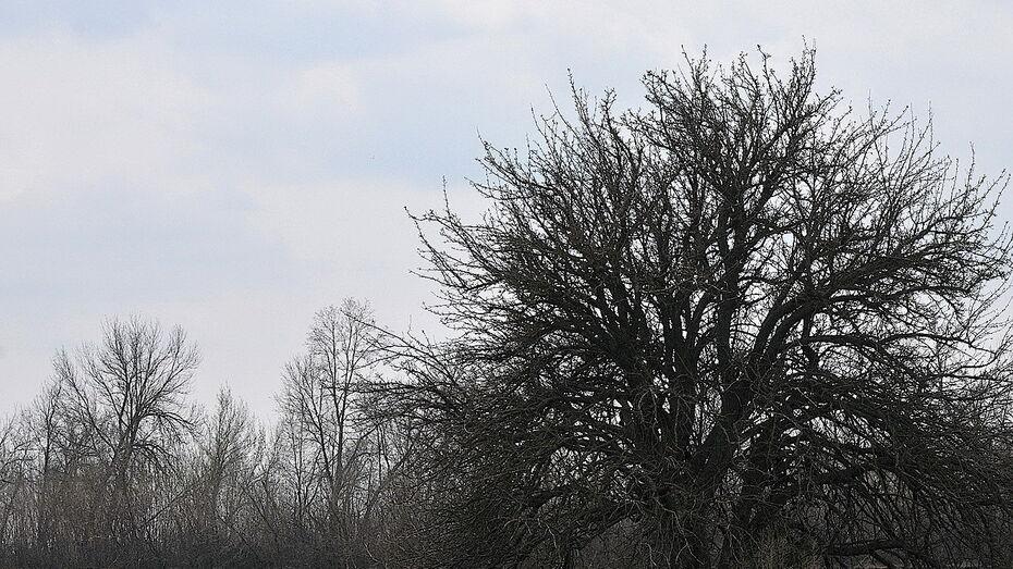 Похолодание не придет в Воронеж на рабочей неделе