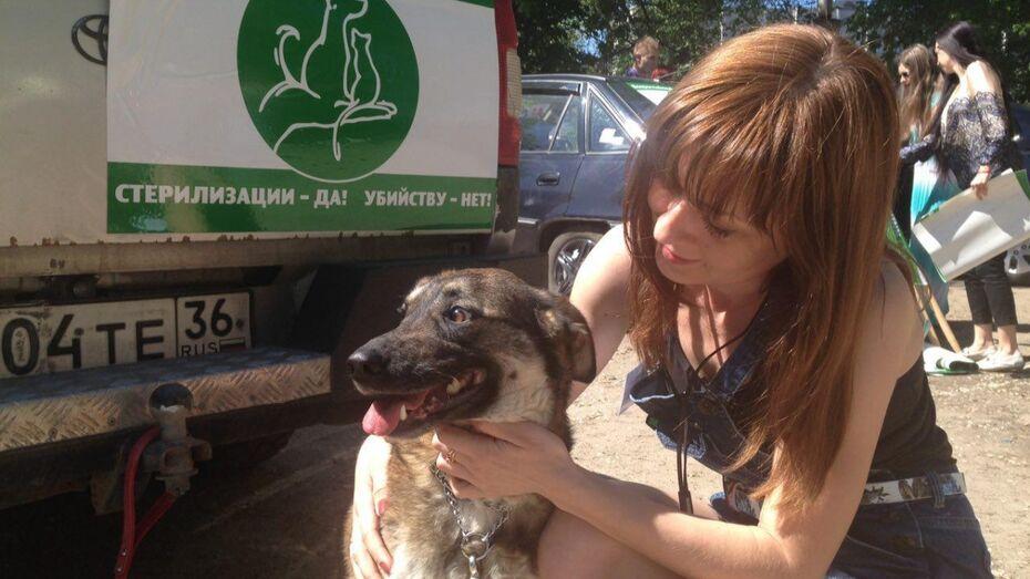 Участники автопробега в защиту животных попросят власти Воронежа о зооприюте
