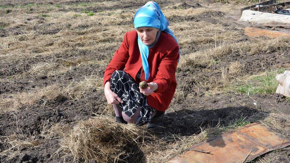 Поворинская огородница освоила шумерскую технологию земледелия
