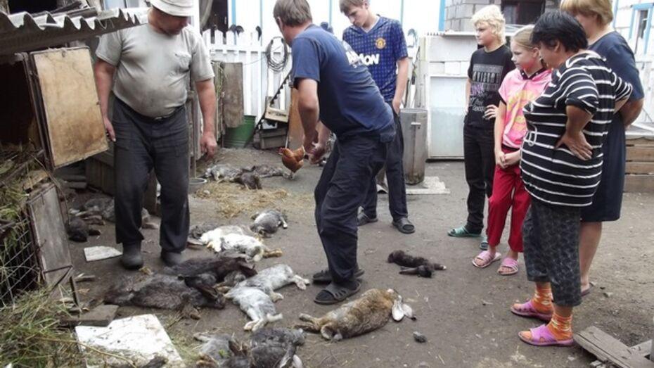 В терновском селе на трех подворьях неизвестные животные растерзали около 80 кроликов