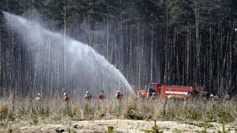 Прокуроры нашли в воронежском Лесхозе многочисленные нарушения охраны от пожаров