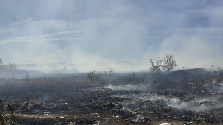 В Грибановском районе выгорело 2 га сухой травы